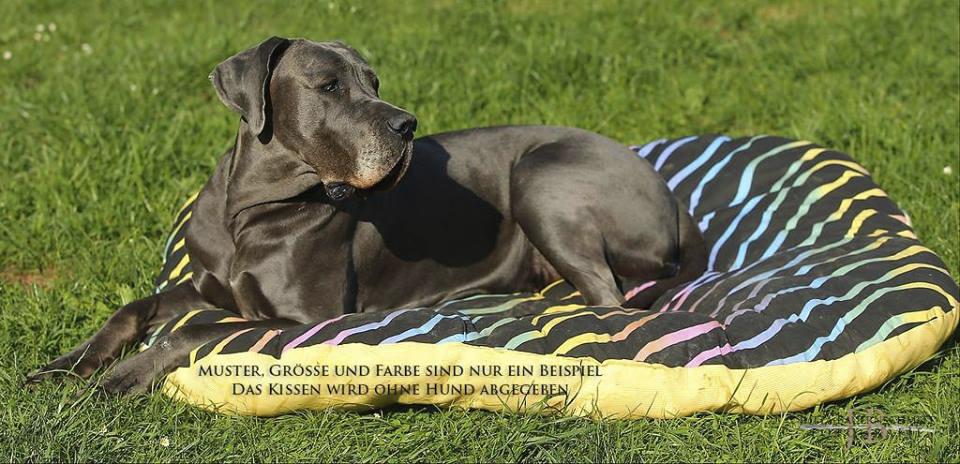15. CAC-Schau der OG Bayreuth 2018